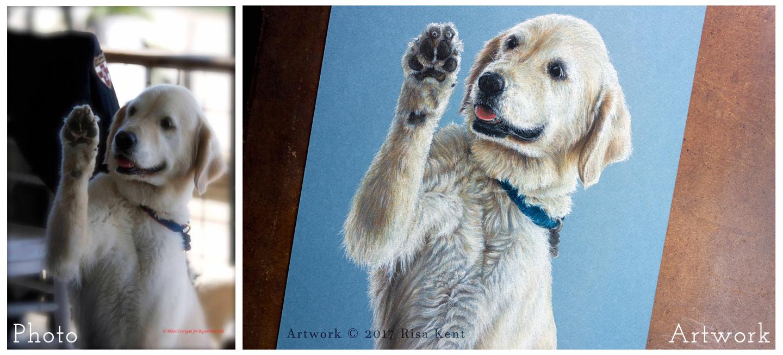 Risa-Kent-dog-art-portrait-compare