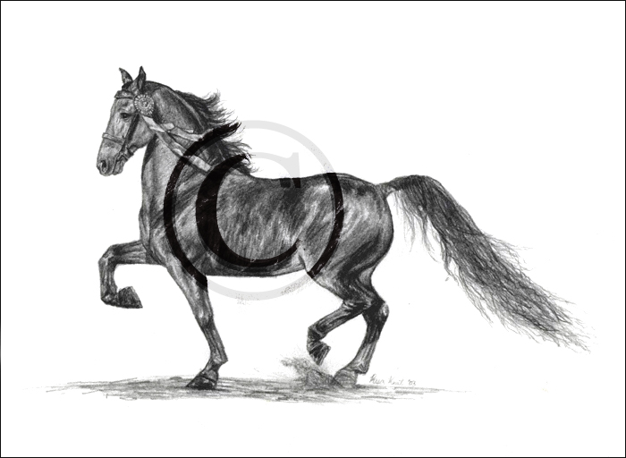 "My very first commissioned horse portrait of a Morgan in graphite back in 2003 when I was 15 years old. This was only about 7"" long and drawn from a photograph. I still like how it came out!"