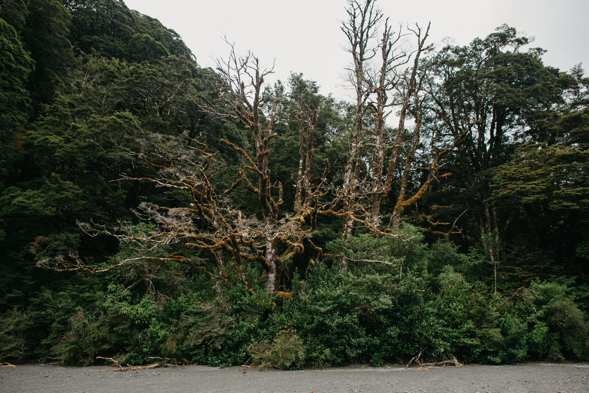 NZ_2016-73.jpg
