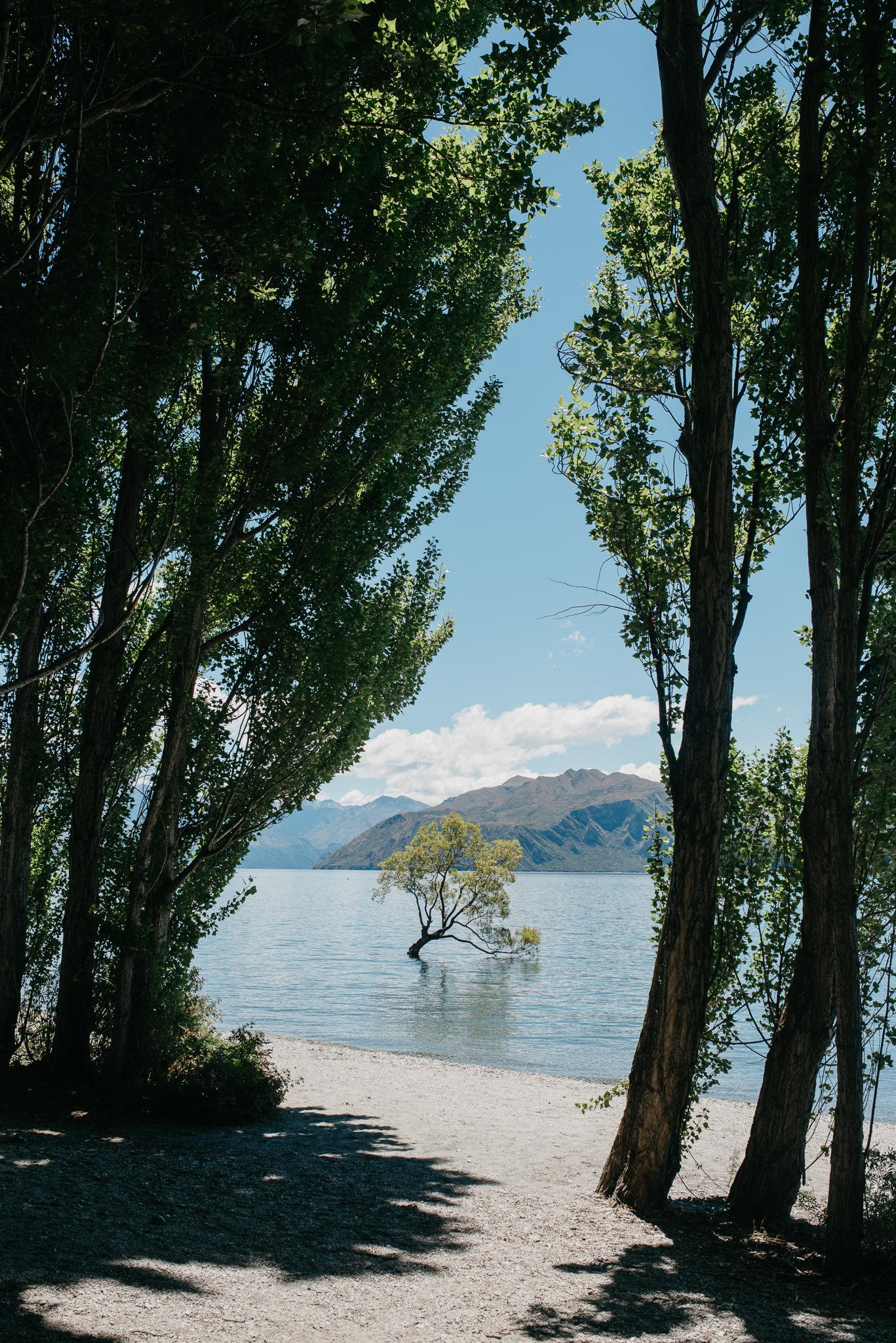 NZ_2017-42.jpg