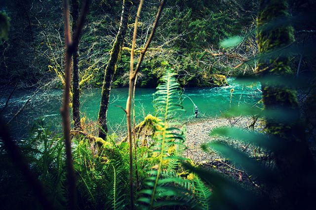 Steep canyons, deep pools, long glides and tail-outs. A beautiful day on the Kilches River with #steelheadgreen water than would make any fisherman excited. 📷: Justin Bailie #kilches #swinging #nymphing #salmonsuperhwy