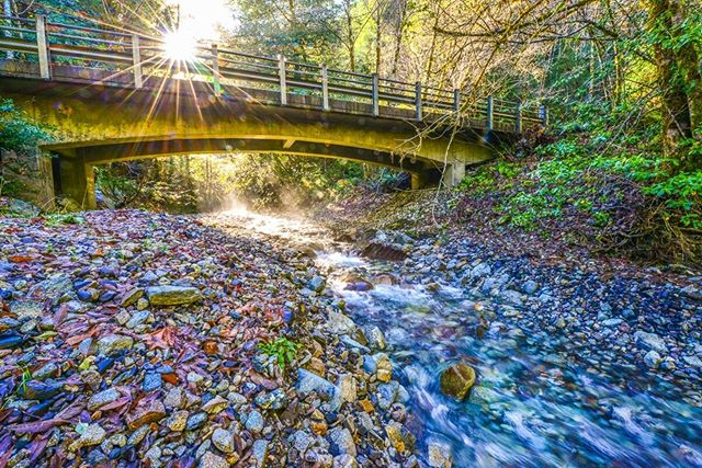 An absolutely stunning photo of a stream spanning bridge structure in Tillamook County. Every project completed by the Salmon SuperHwy and project partners increases available spawning and rearing habitat for 5 species of salmonids while also minimizing risk of flooding and subsequent economic losses. 📷 @schnitzerphoto #flowingwater #fishpassage #pacificnorthwest #oregonsalmon #win/win