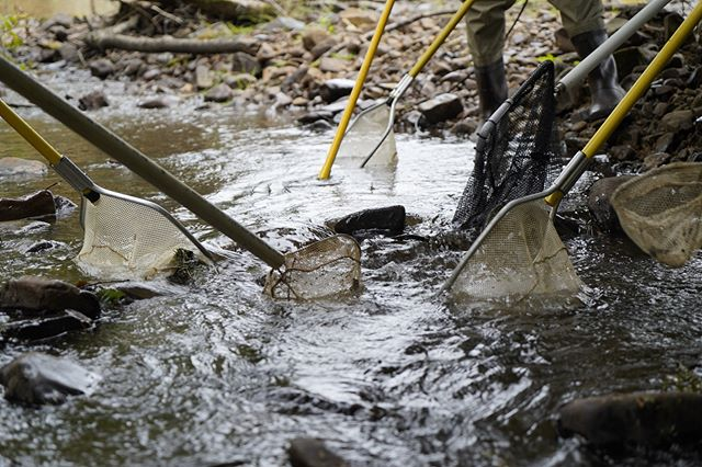 All hands, or should I say nets, are on deck to assist with fish salvage prior to construction on Jewel Creek. Before any work begins, all species of fish and other stream denizens are safely removed and transported out of the job site to limit unnecessary mortality. 📷  @whithassett #savingsalmon #helpinghands #habitat