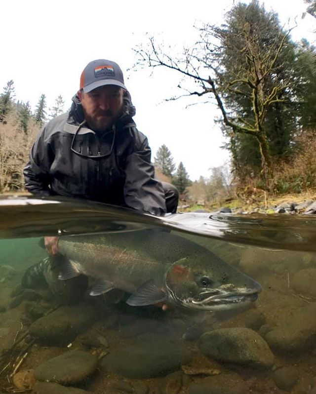 There were some awesome pictures submitted to the SSH photo contest and selecting a winner was very challenging but the cool underwater shot of a Wild Winter Steelhead from Justin Crump is the winner! Thanks to all who participated and don't worry, there will be more chances to win stylish SSH swag in future photo contests!! Photo credit: Justin Crump #tillamookfishing #keepemwet #photocontest #exploreoregon #wildsteelhead