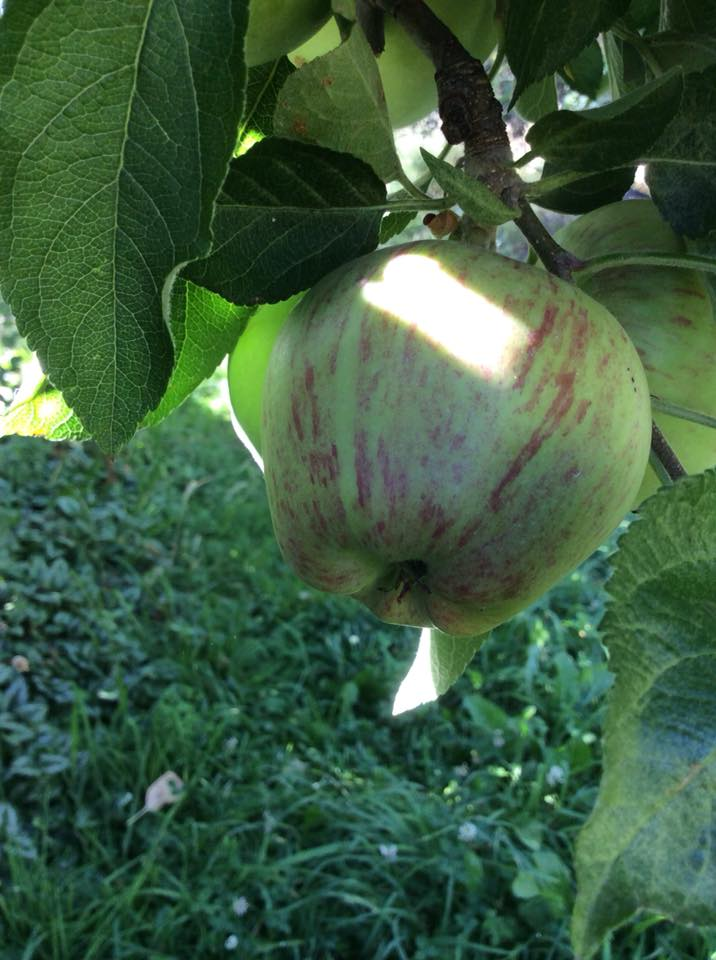 apple jan2018