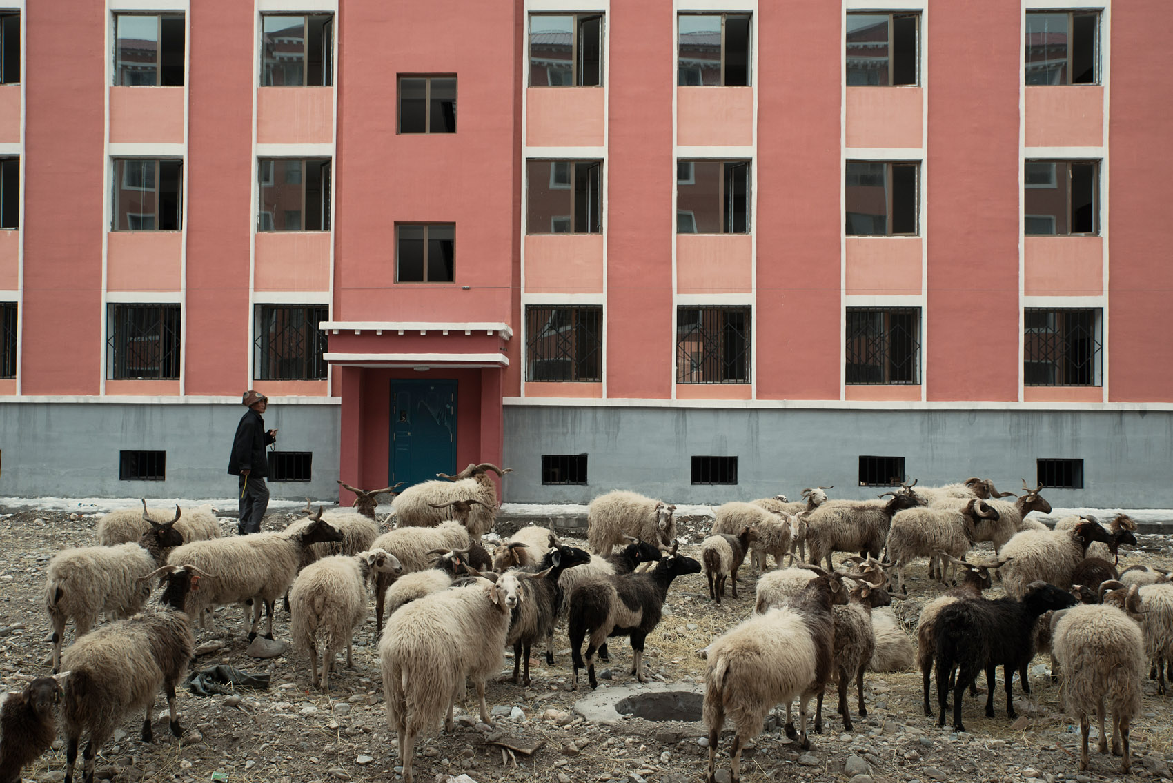 In a residential compound recently completed, but yet waiting for its inhabitants, a Tibetan herder has brought his livestock, sheep and horses, to graze in the rubbles. The government campaign to move Tibetan herders to urban areas and curtail pastoralism has put the nomads traditional lifestyle and livelihood at risk. The environmental rational behind this policy is questioned by human rights group and scientists alike.