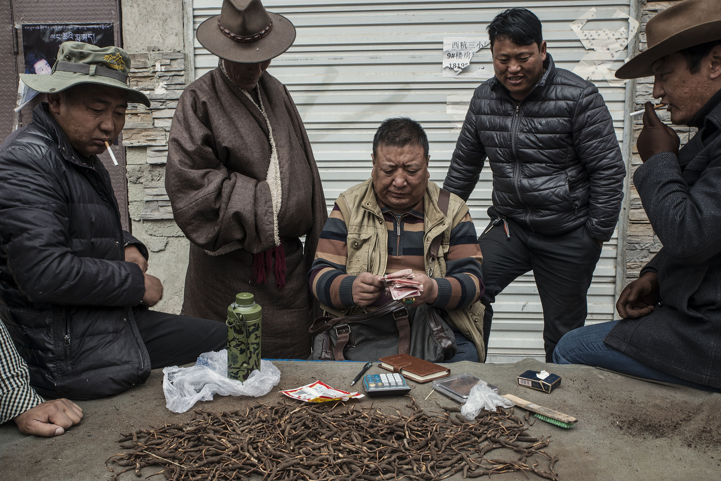 In Yushu (Qinghai) Tibetan nomads surrounding a middle-man at cordyceps market. The cordyceps is a highly coveted fungus used in traditional Chinese medicine, harvested in spring at high altitude in the Himalayas. Some nomads make tens of thousand of dollars annually from the cordyceps trade. However this source of income is drying up as, prices have dropped recently. Over harvesting is another threat to this new source of income, which has compensated for some, the loss of income resulting from the restriction to pastoralism.