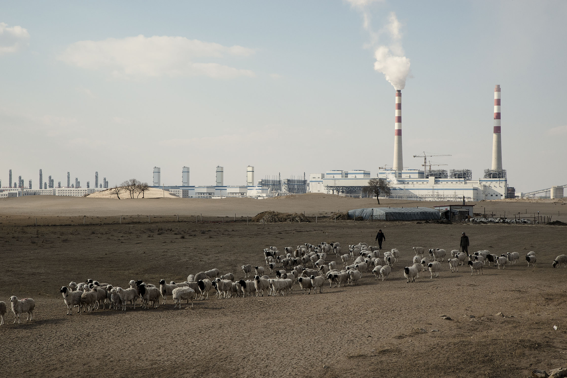 In Hexingten (Inner Mongolia) a herder takes his sheep grazing nearby a coal to gas power plant, polluting the water and the air. Local herders have been protesting the plant and ended up in jail. Throughout Inner Mongolia, herders and nomads have had to give up their land for government projects : mining, power plants, military zones, leading some to suicides and many to prison.