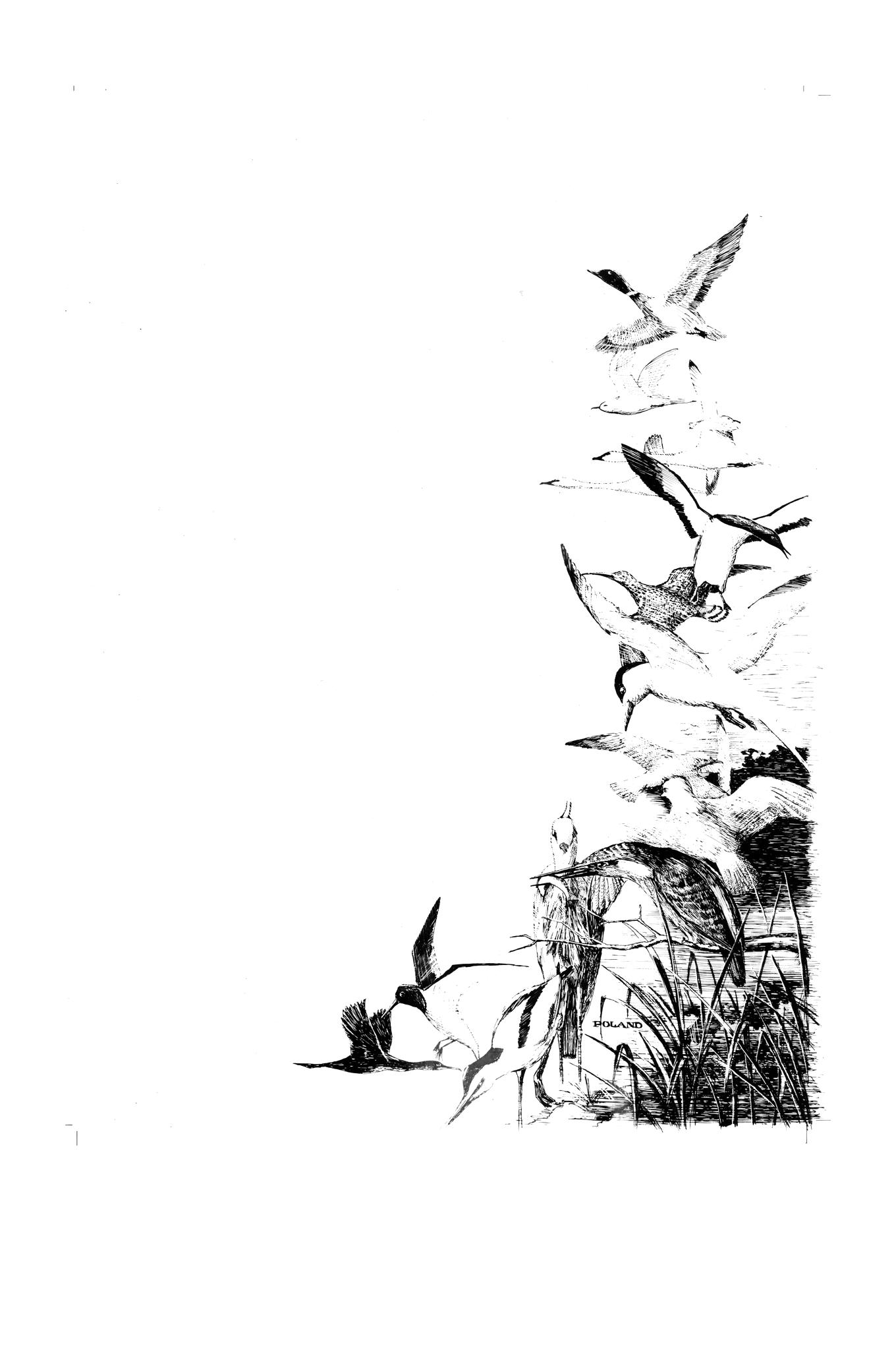 BQbirds.png