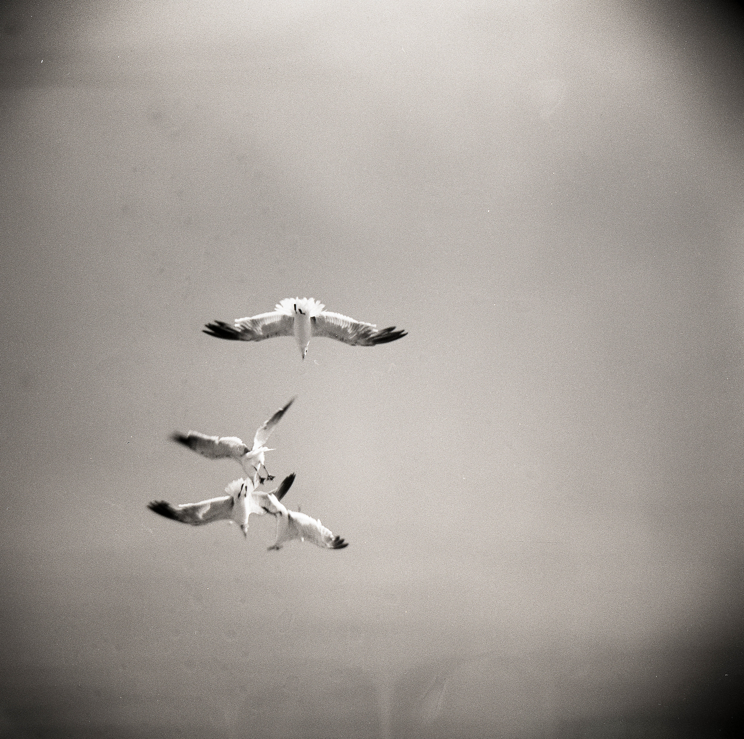 Midair battle captured on a Holga. You'll notice in these next few frames that there are some splotches. That's due to the fact that I foolishly skipped Photoflo at the end and our hard water dried on the negatives.