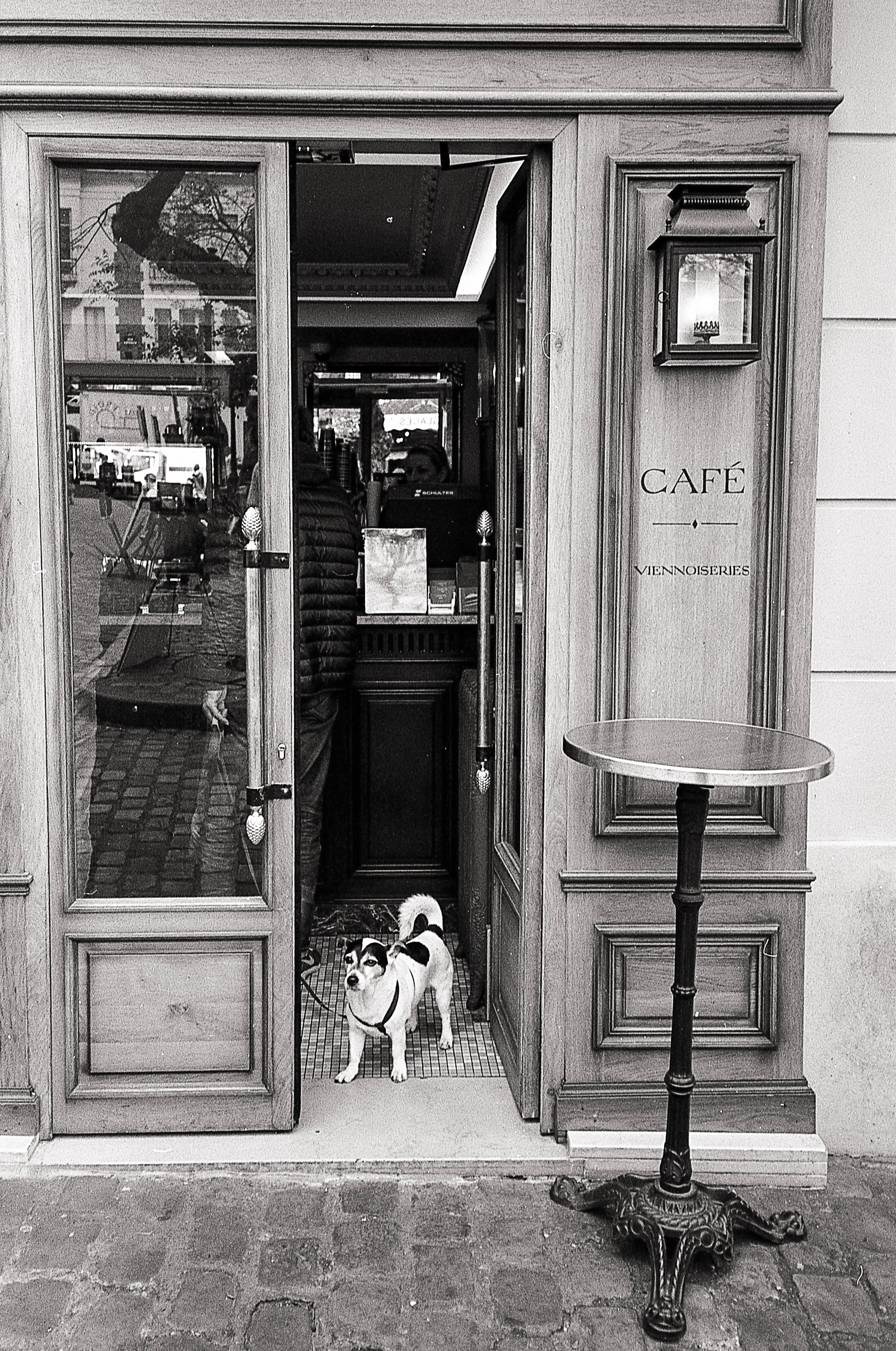 Europeans love their dogs. They are everywhere.