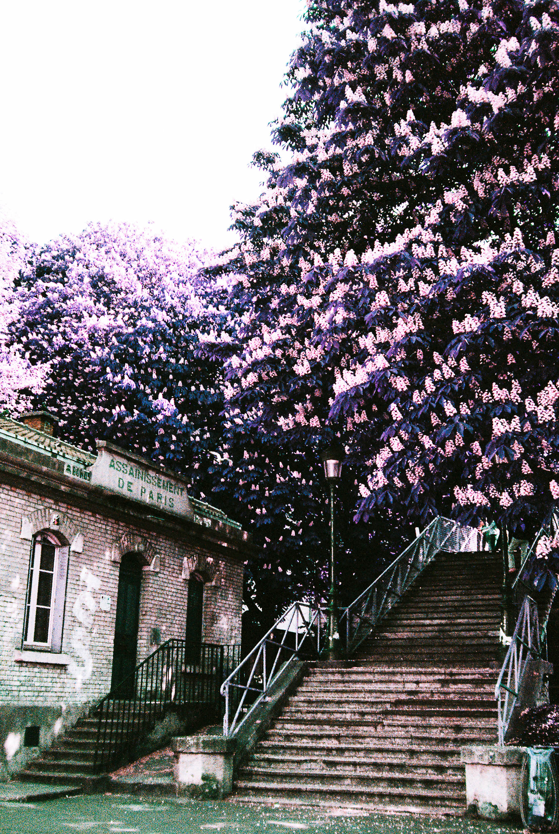 """You'll see a few """"strange"""" shots like this. I was experimenting with a film that turns green to purple. I kind of fell in love with it."""
