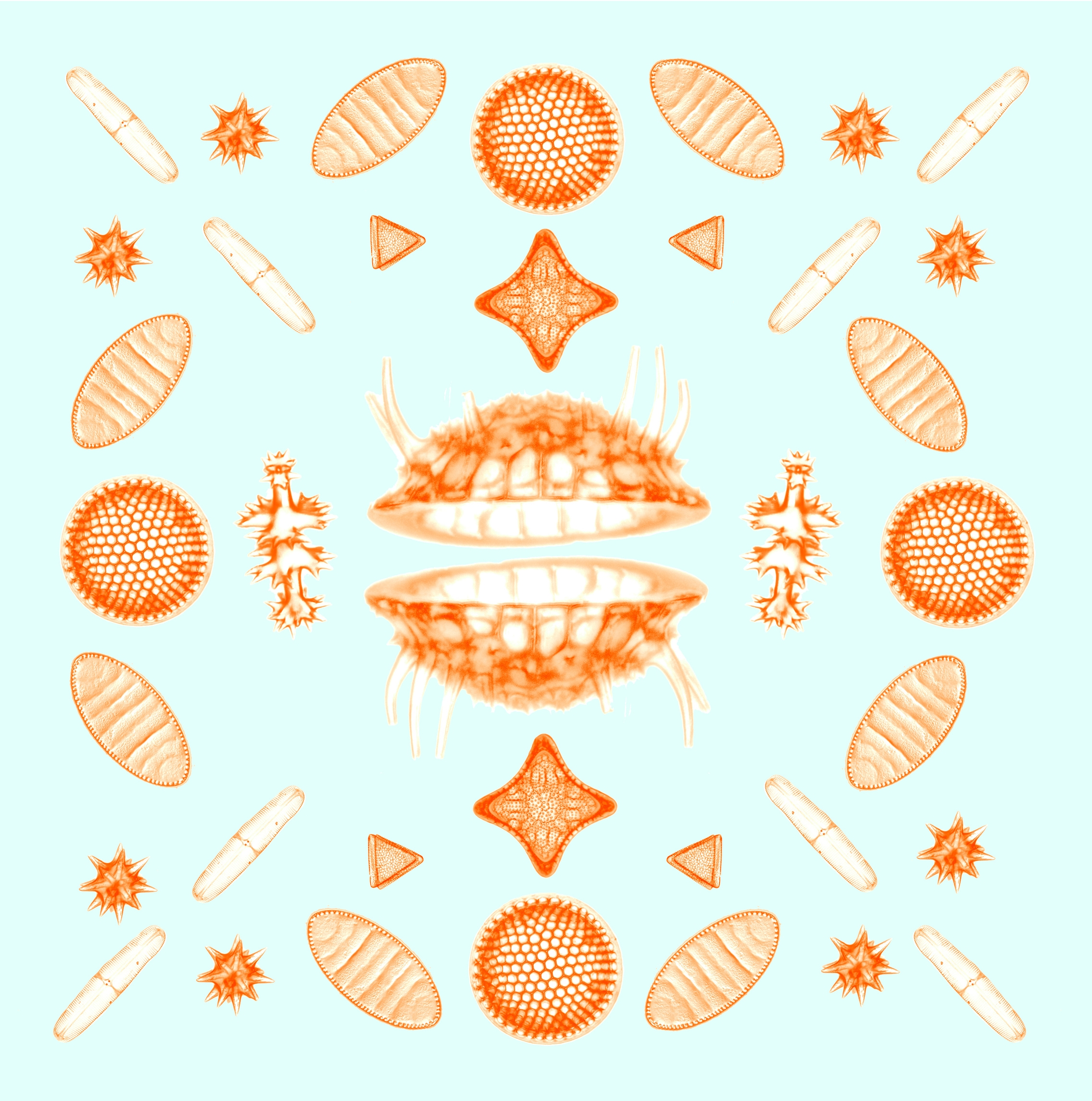 DIATOMS, ARRANGED IN THE STYLE OF A 19TH CENTURY EURO-FLORIDA MATRON
