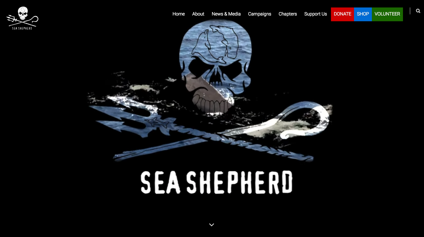 SEA SHEPHERDS! How much do we love these people?