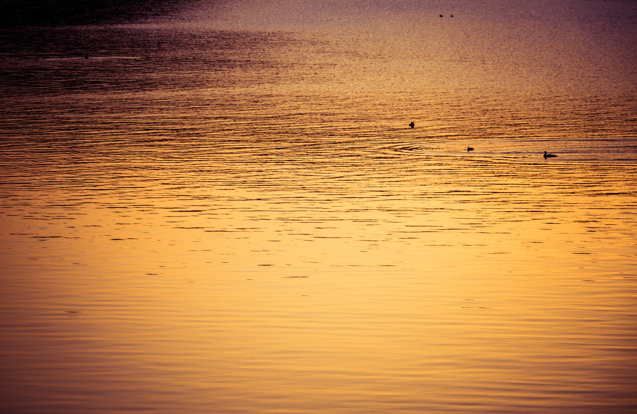 Georgian-Bay-Sunset-Ducks.jpg