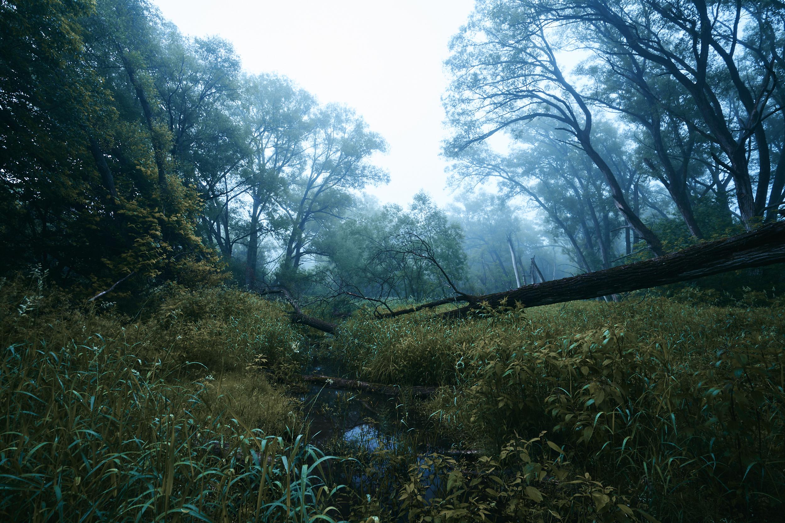 Nolan-Dubeau-Beaver-River-DSC09559.jpg