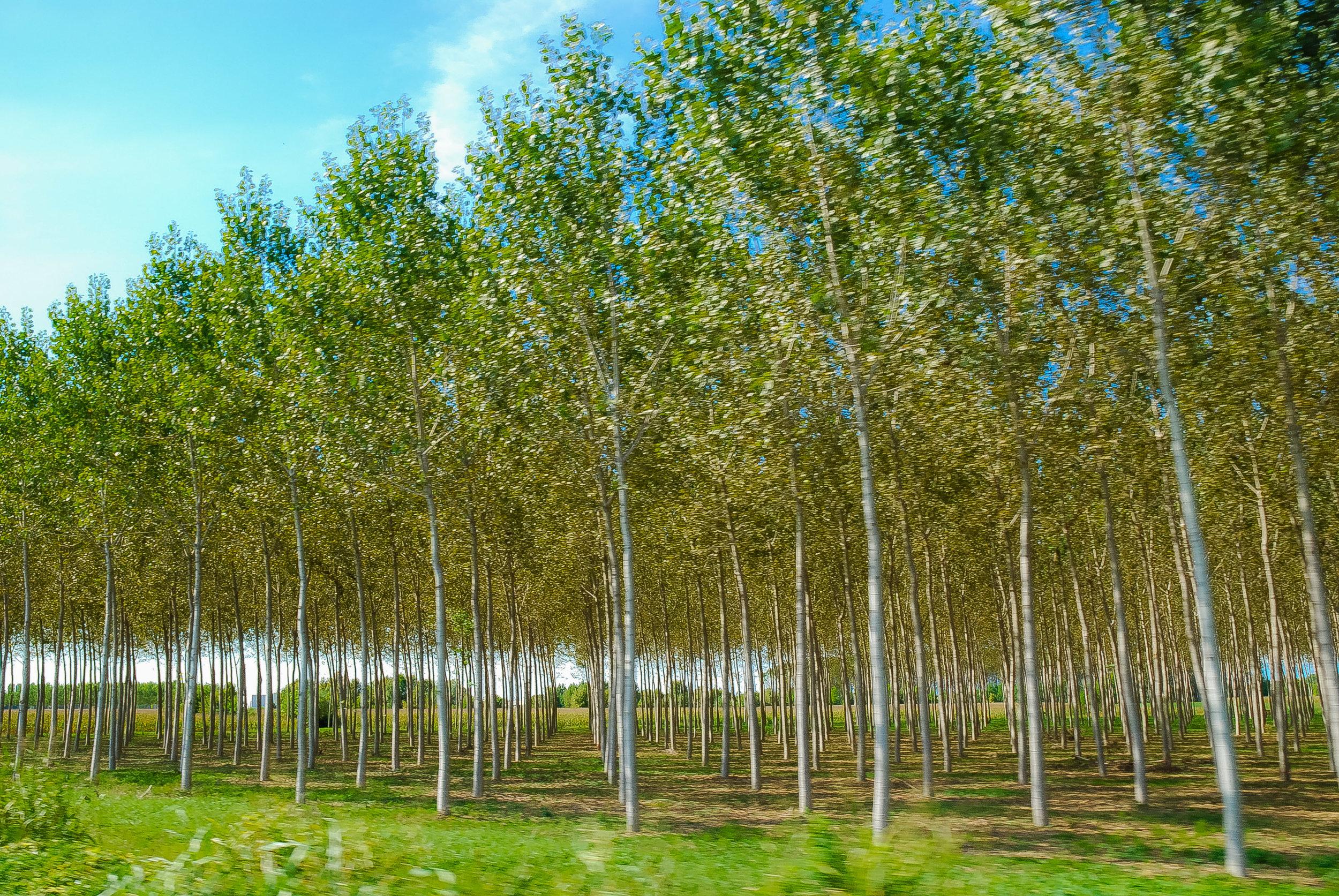 Nolan-Dubeau-Italian-Trees.jpg