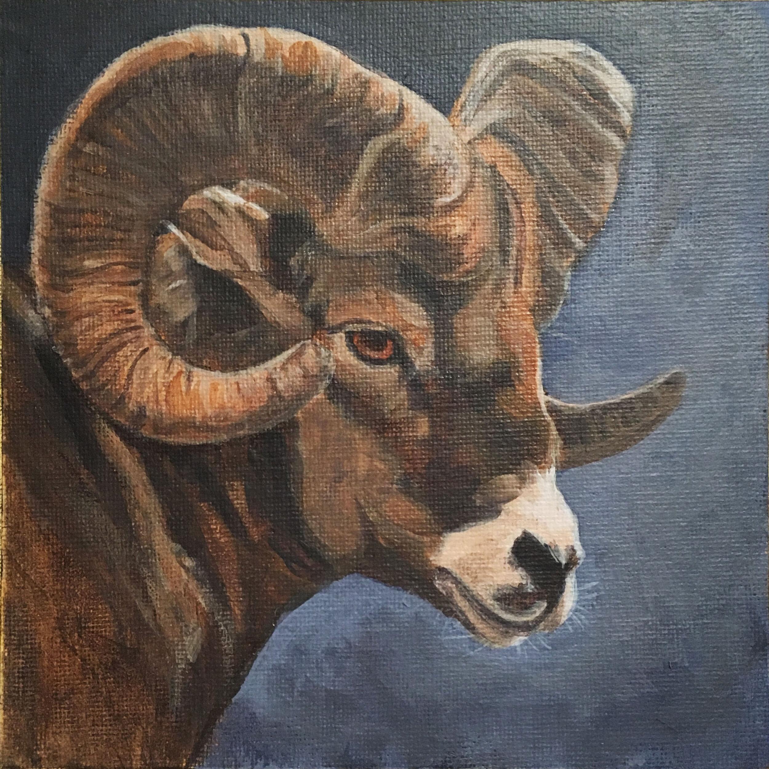 Big Horn Sheep - Acrylic on board
