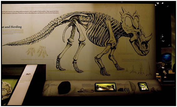Exhibition design for Royal Tyrrell Museum