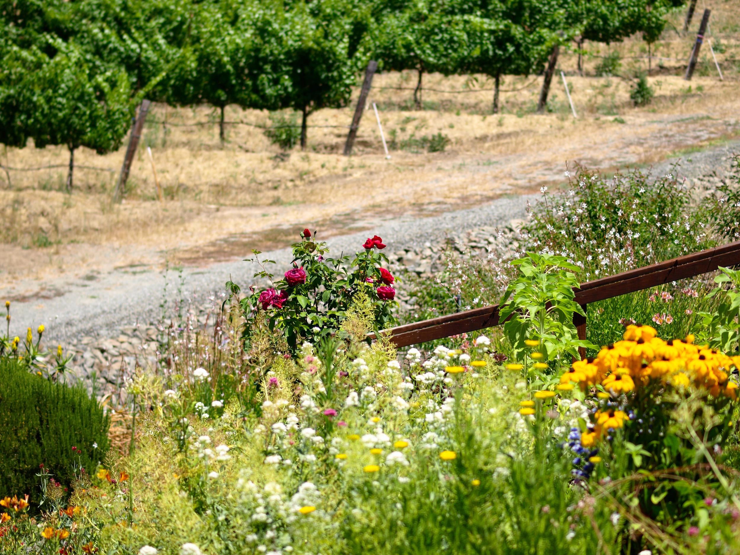 flowers-and-vineyard.jpg