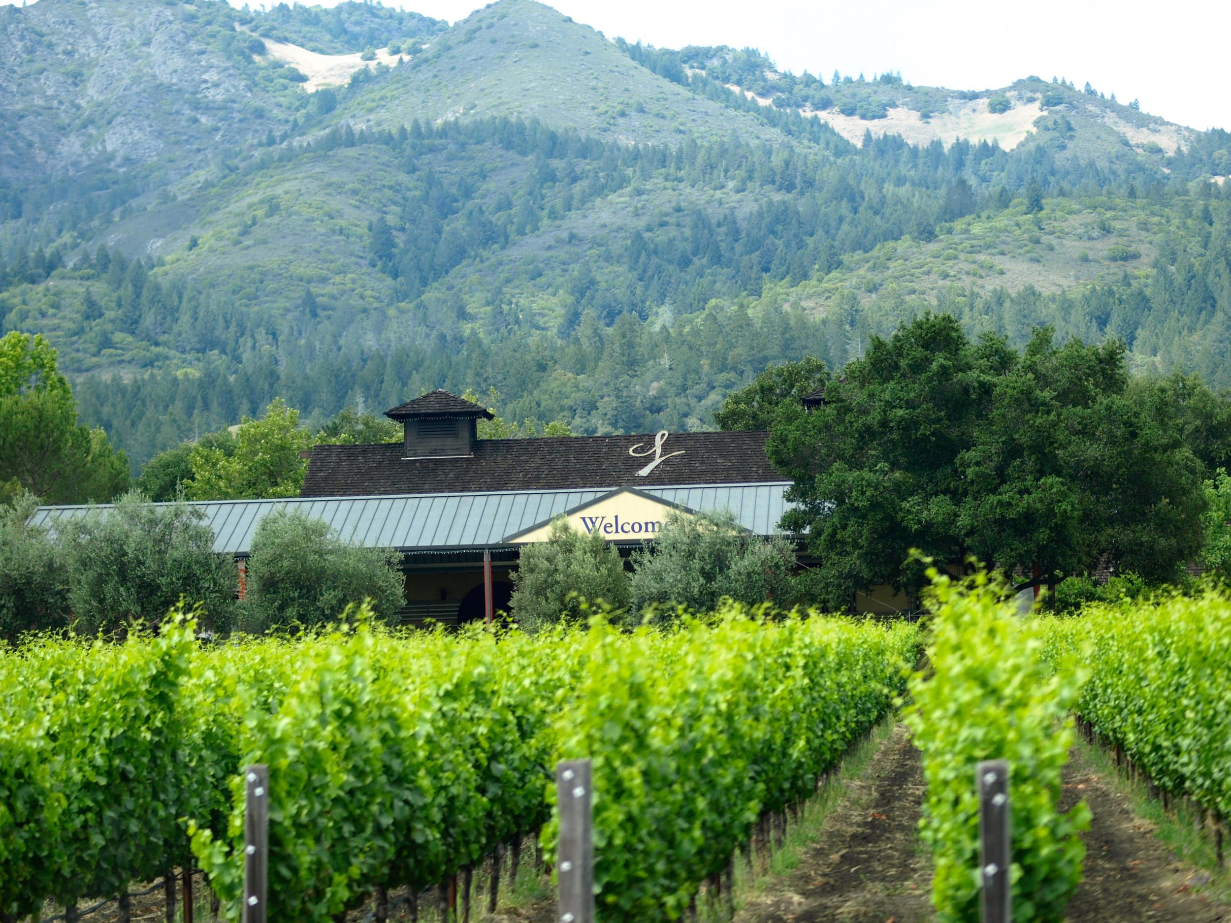 vineyard-in-sonoma.jpg