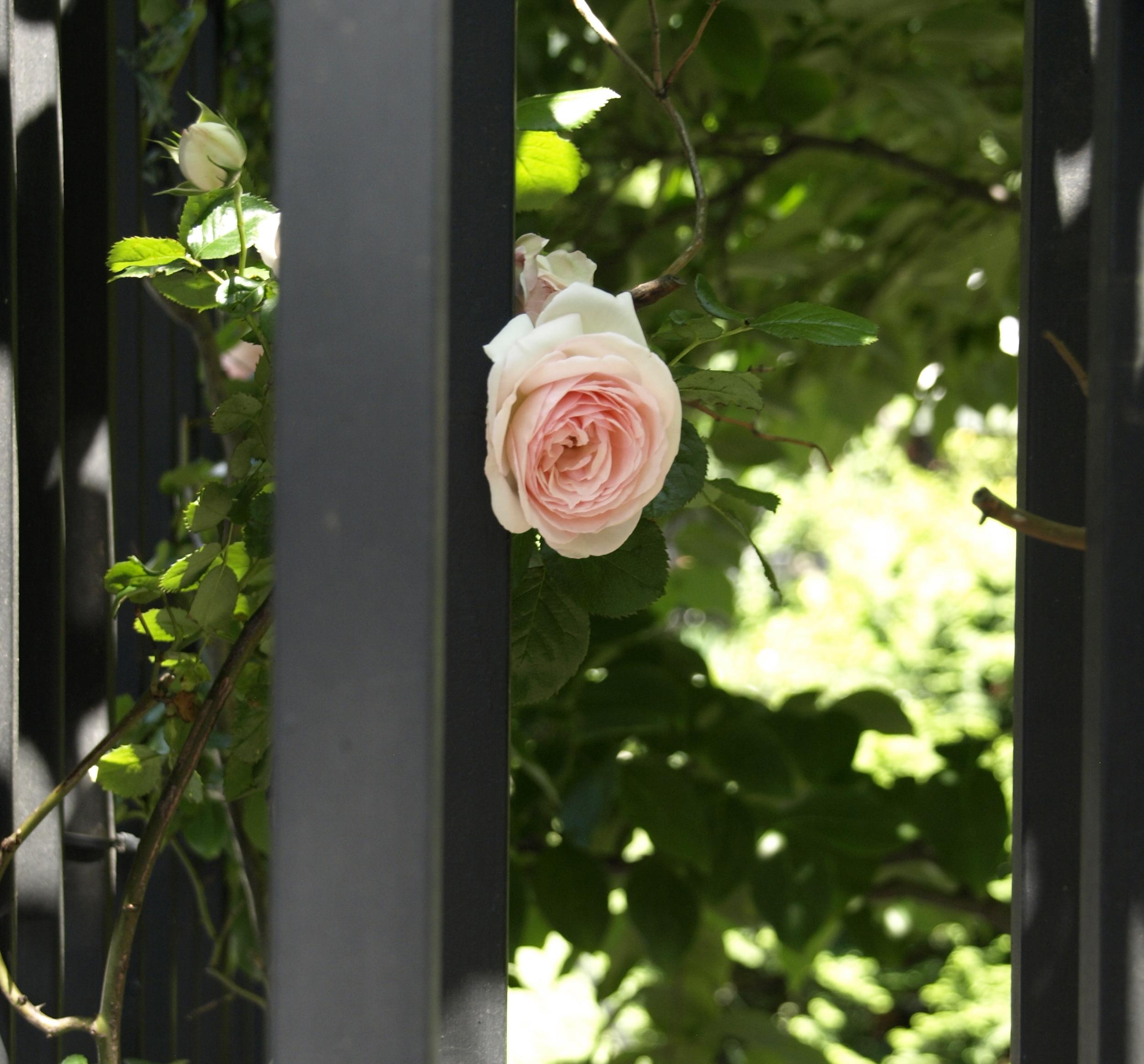 flower-in-new-york-city.jpg