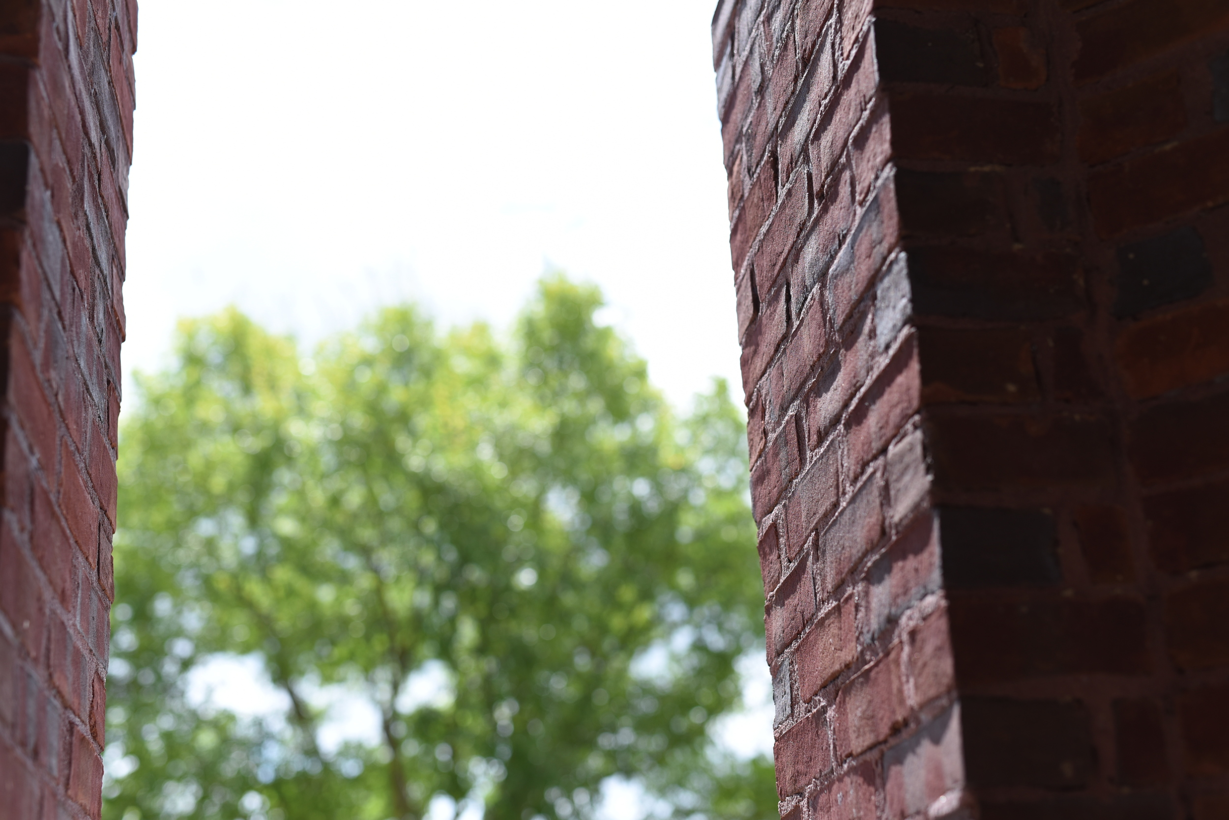tree-through-brick.jpg