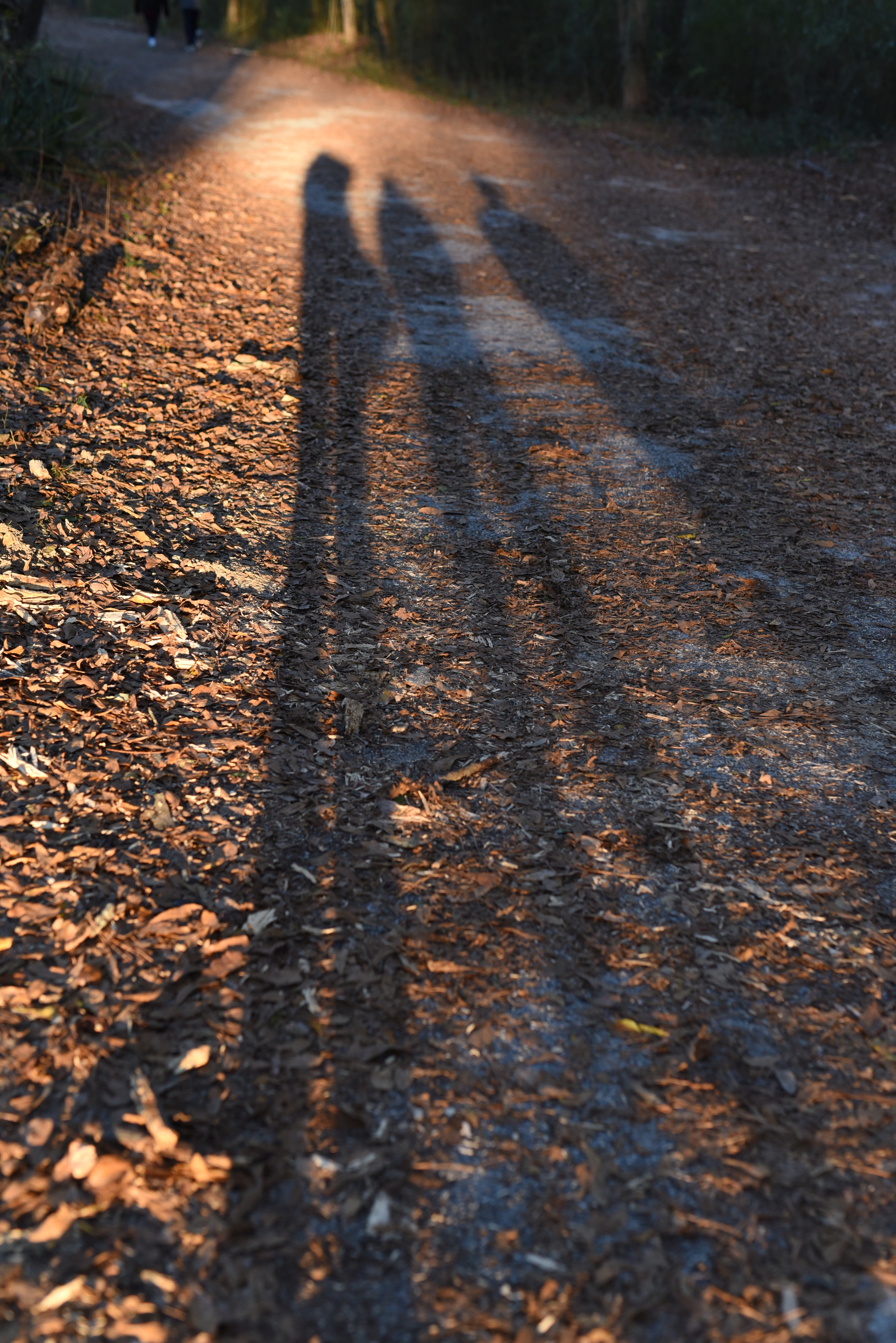 long-shadows.jpg