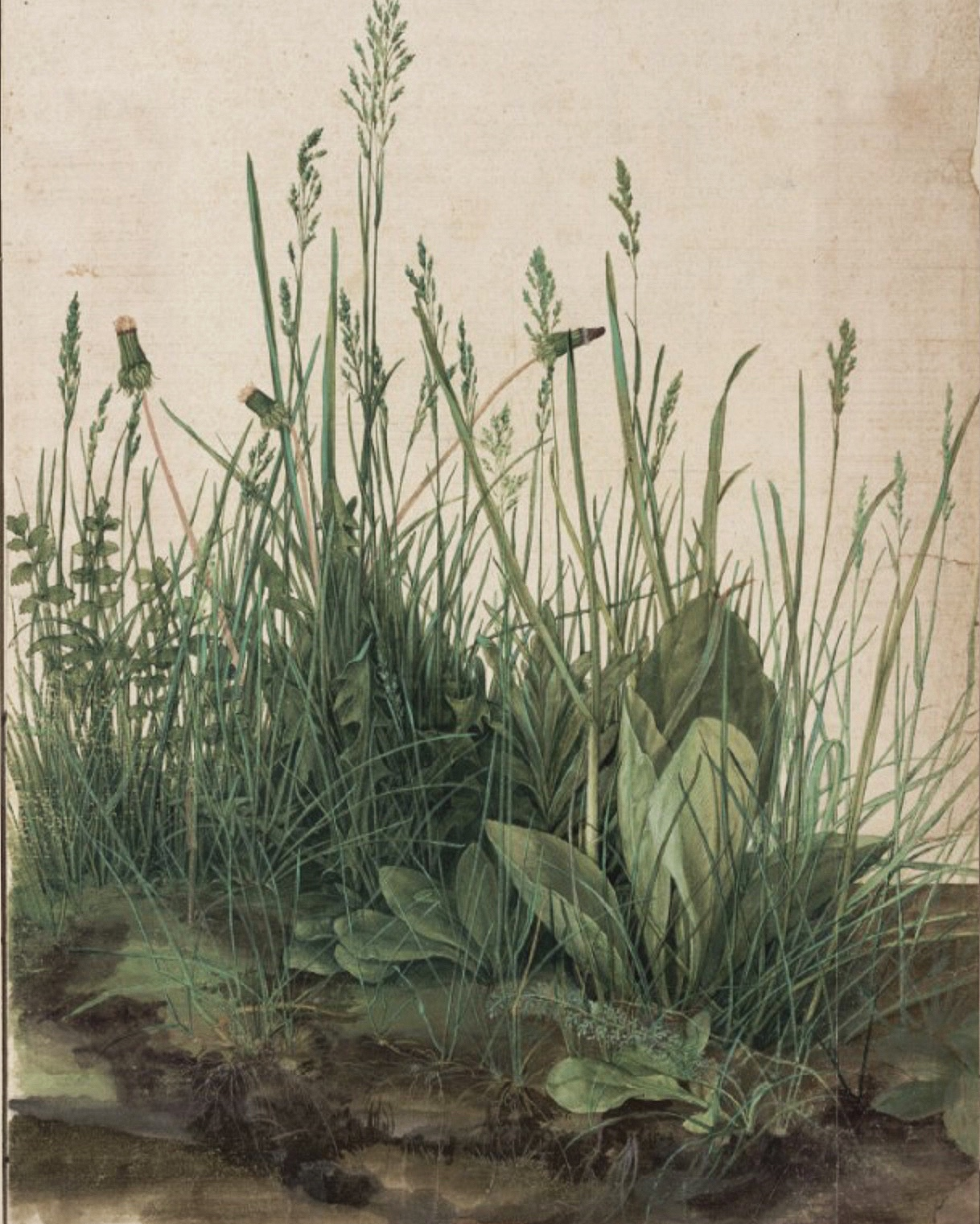 Piece of Turf, Albrecht Durer 1604