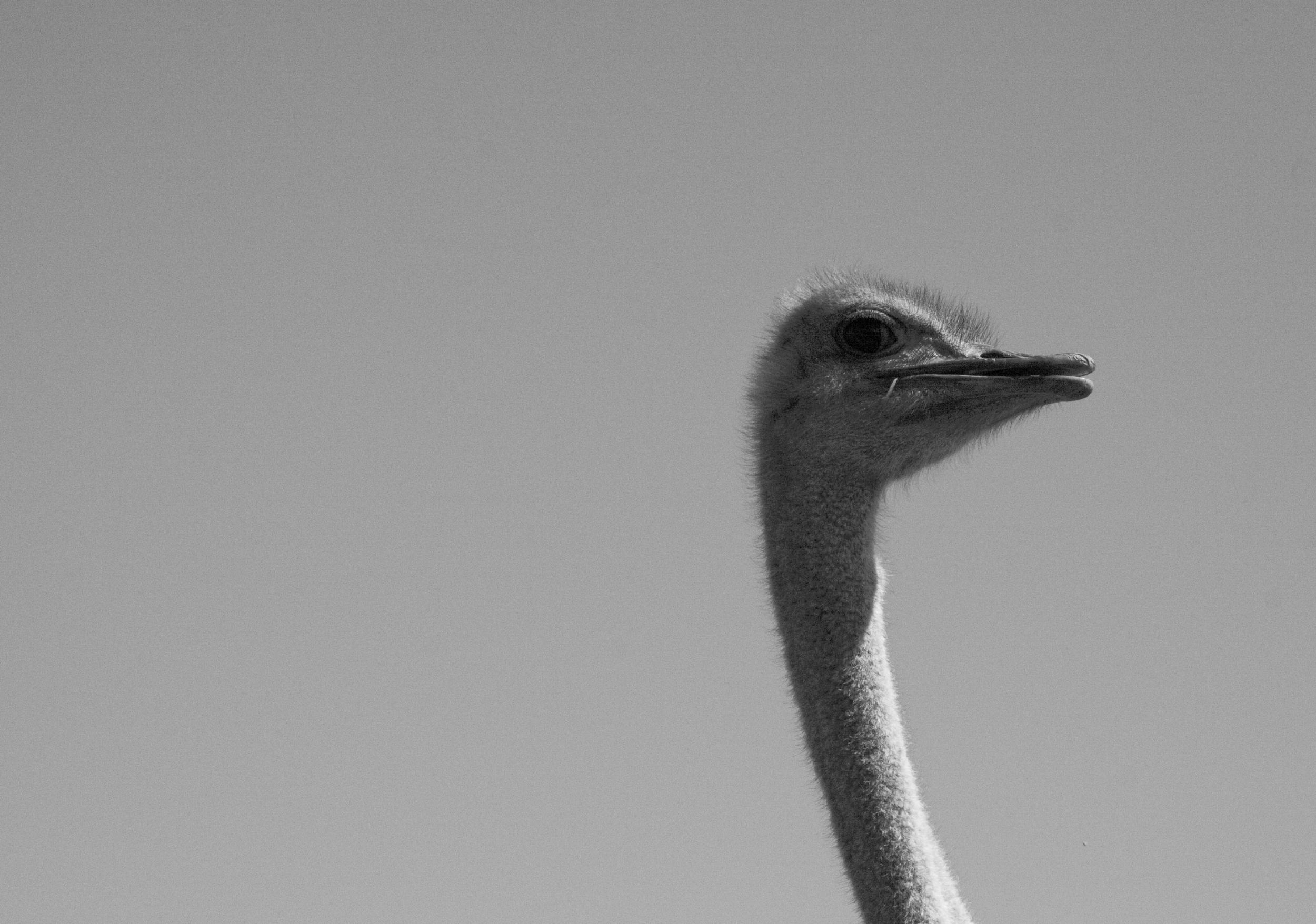 Bird Landing_53.jpg
