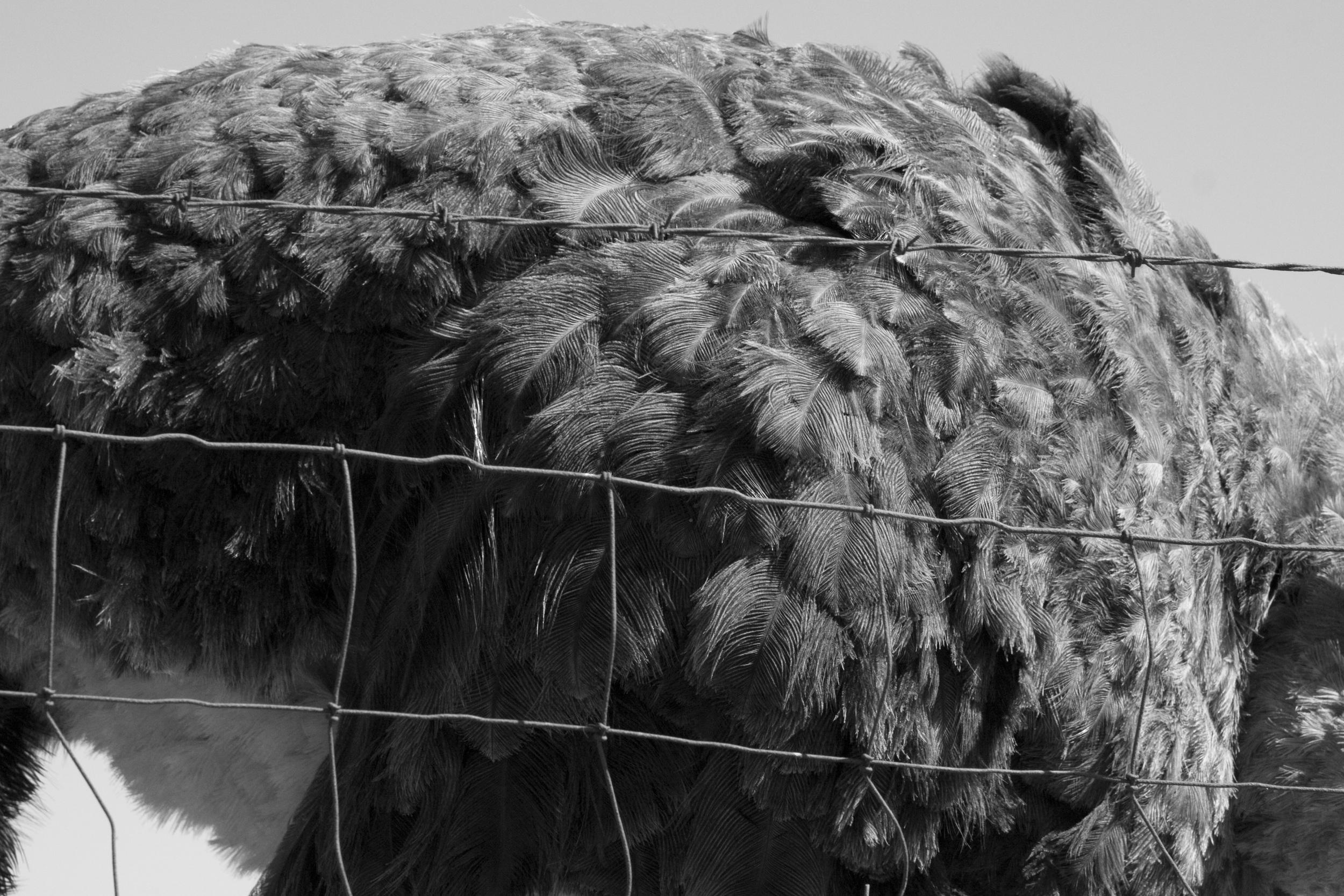 Bird Landing_54.jpg