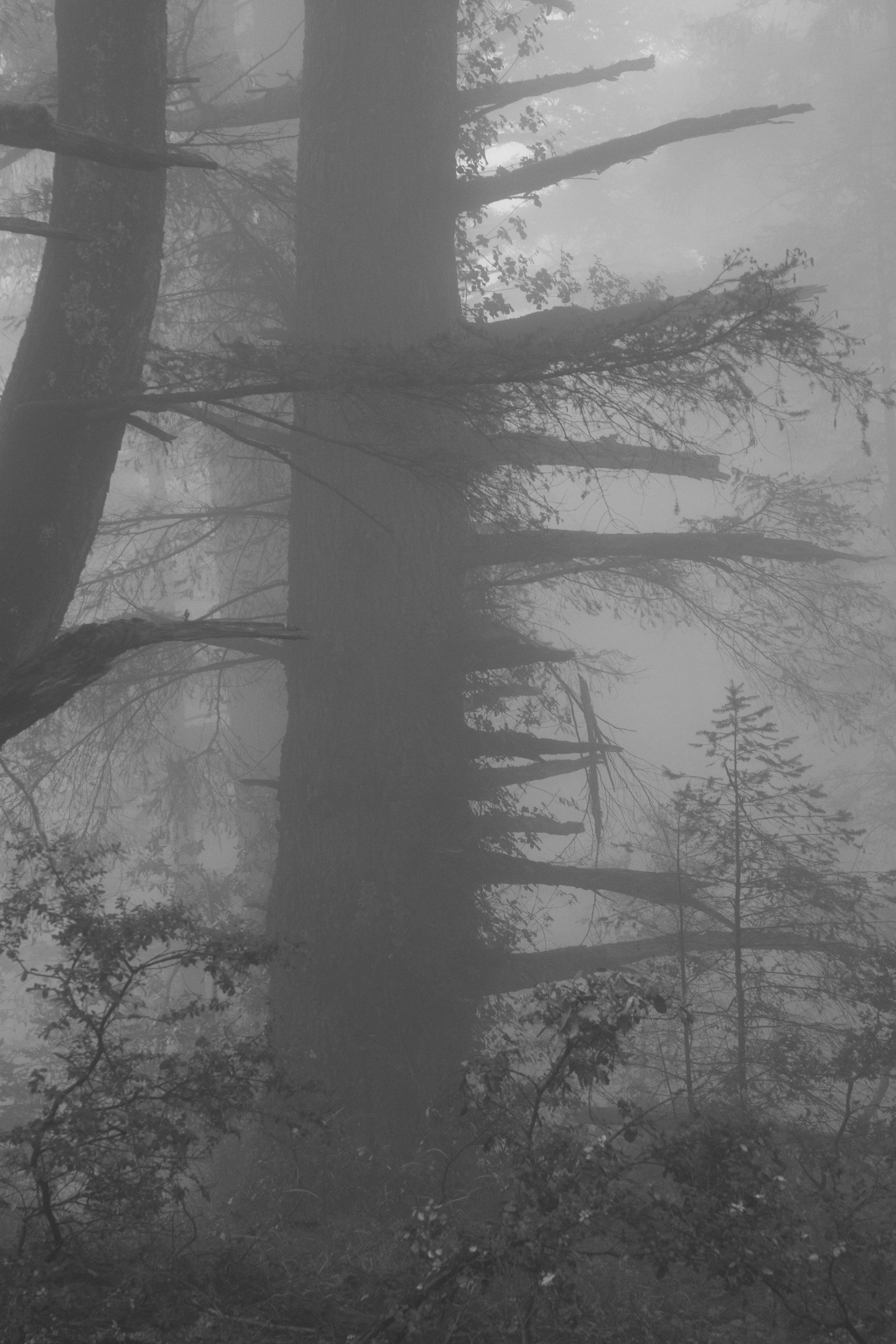 fogline_41.jpg