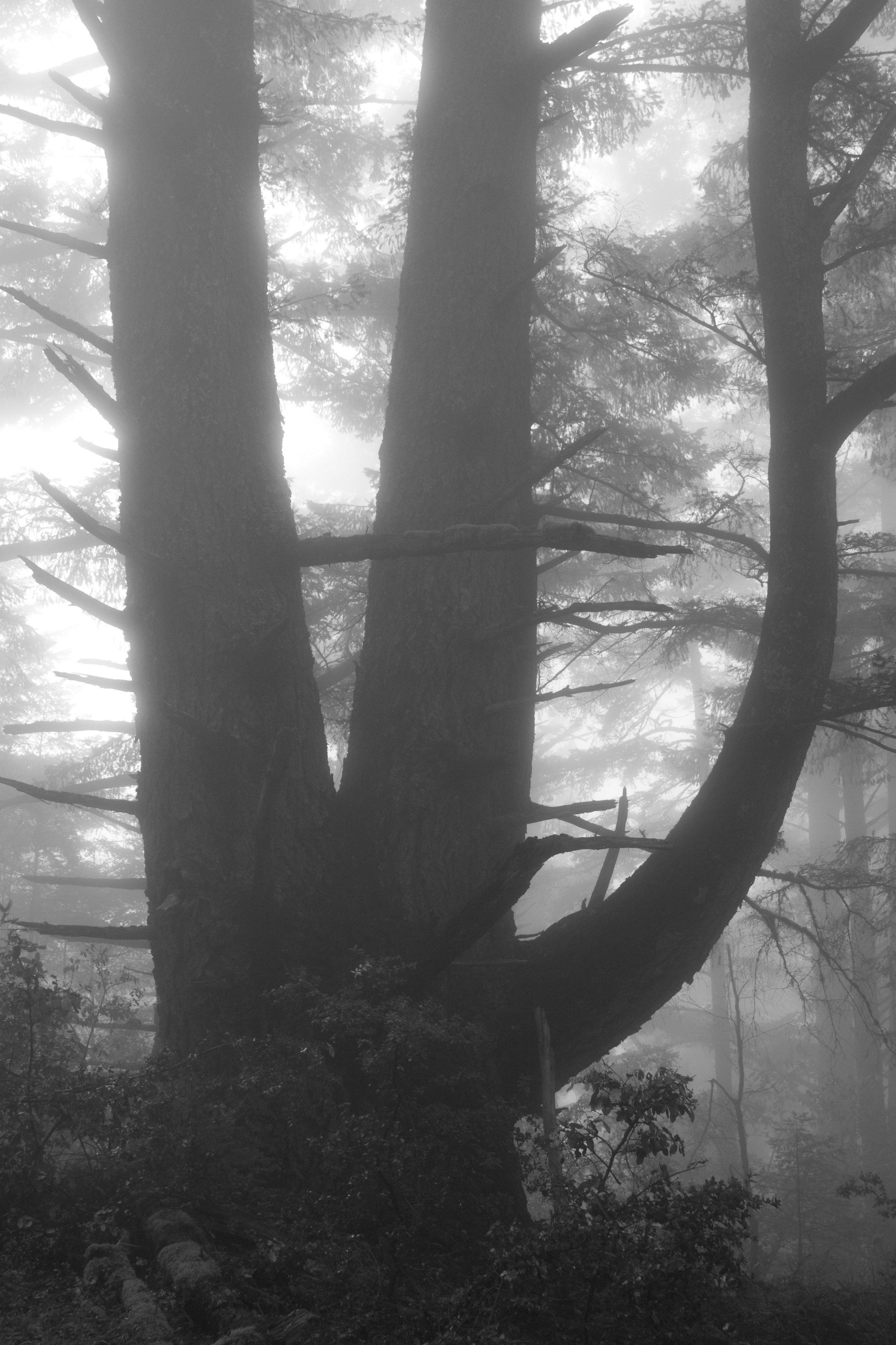 fogline_42.jpg