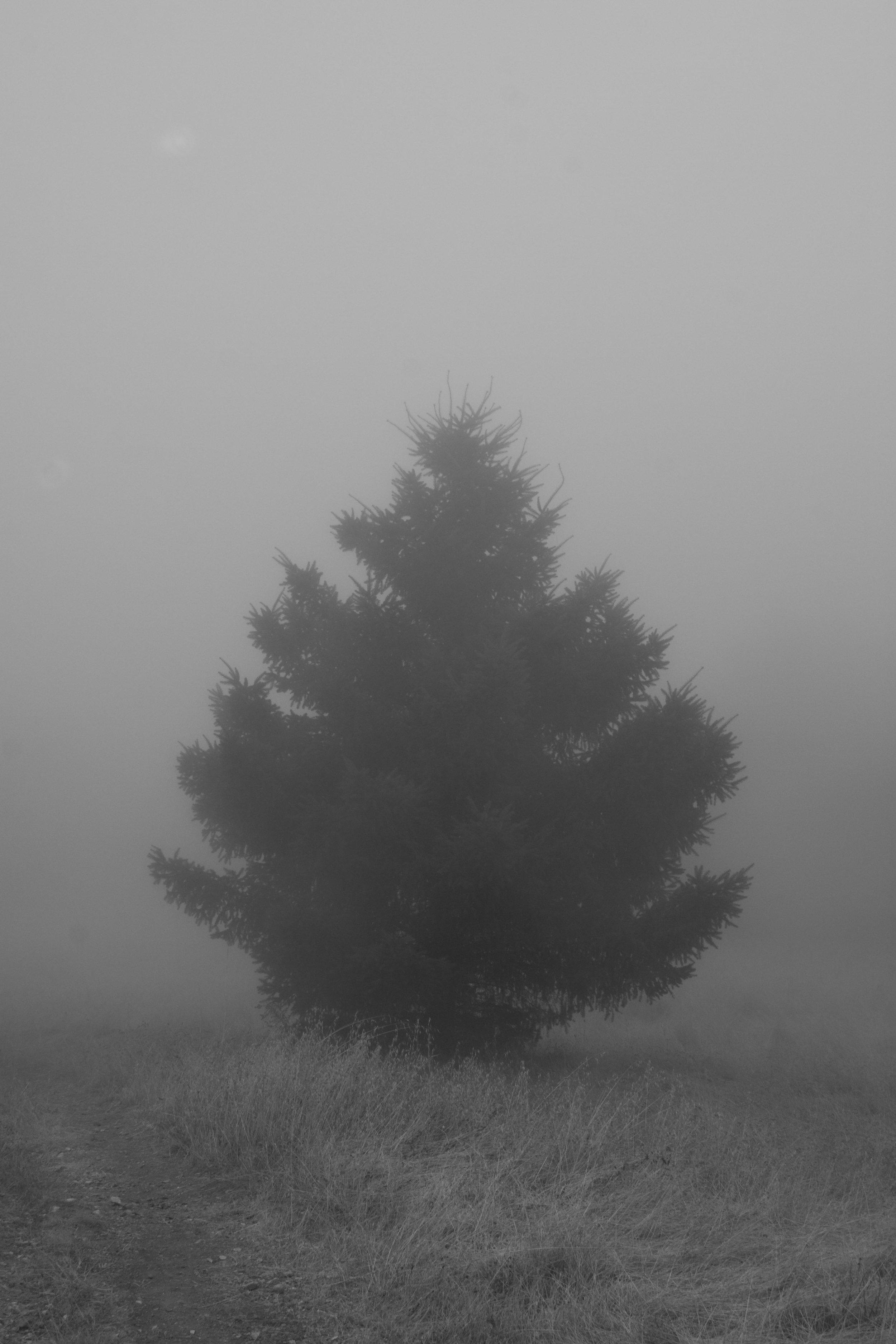 fogline_50.jpg
