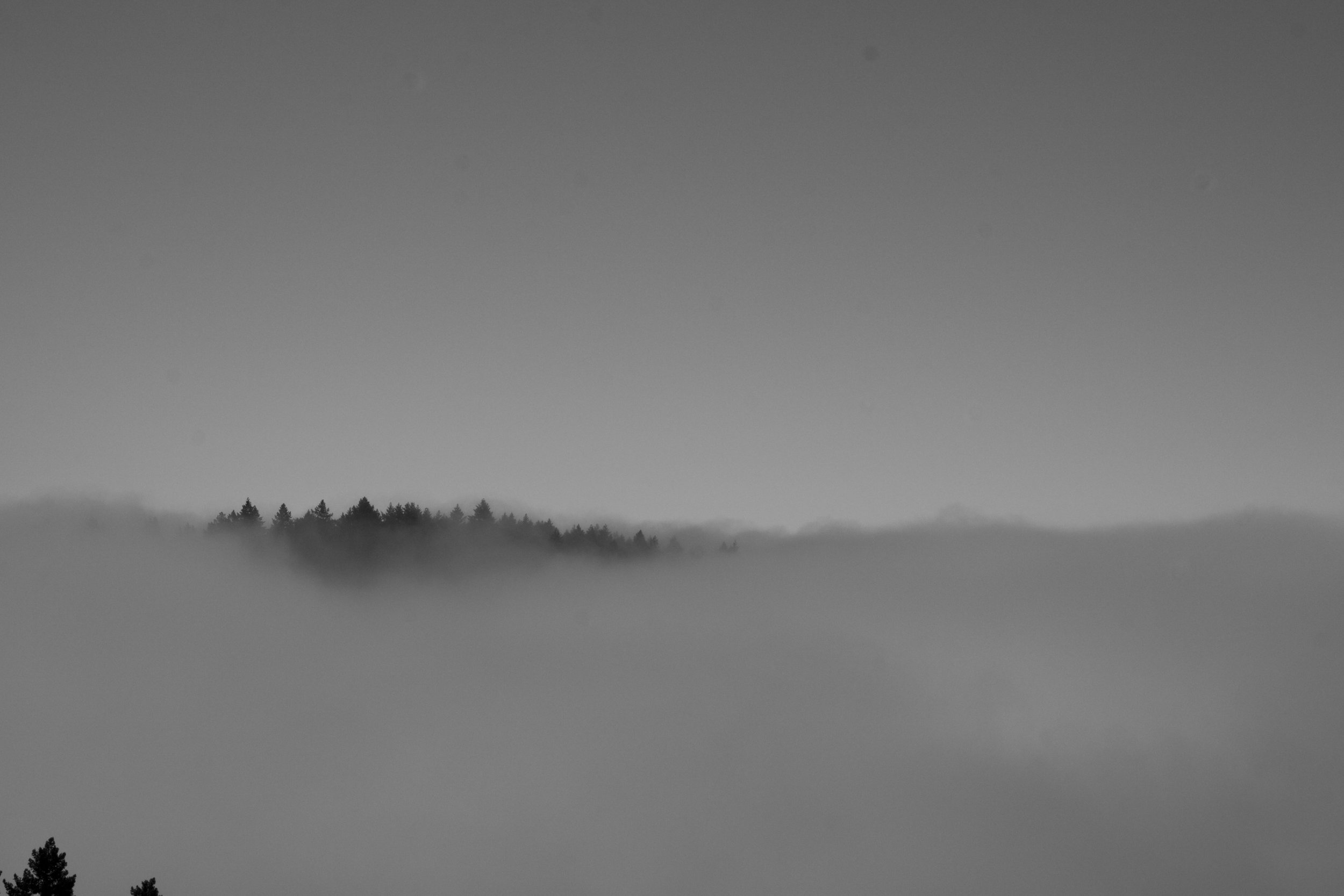 fogline_74.jpg