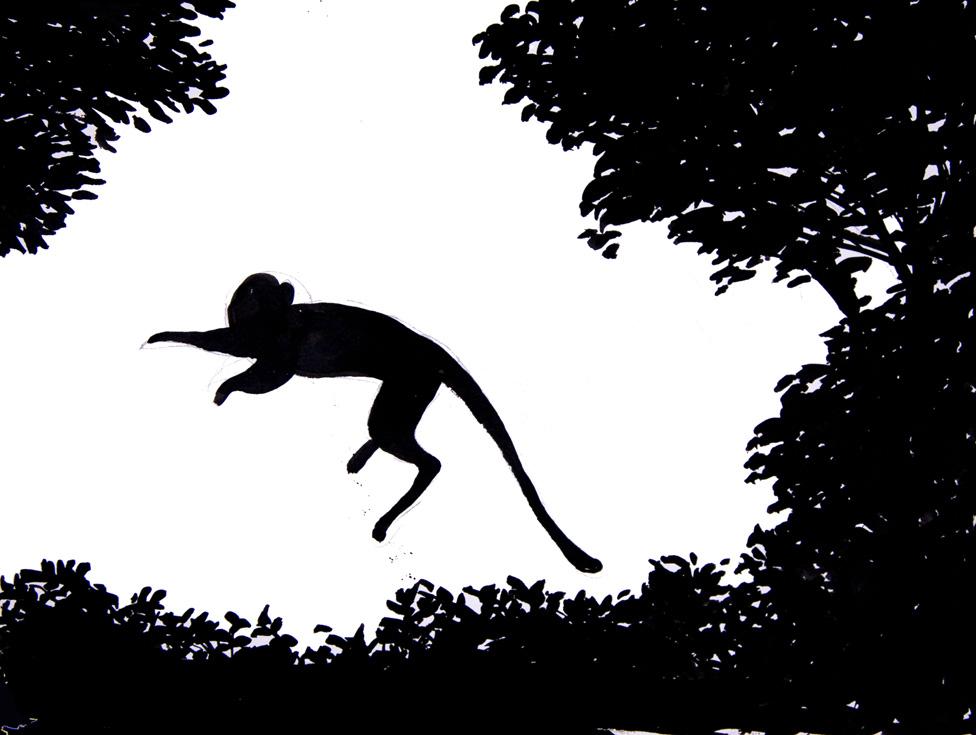 jumping monkey 72 .jpg
