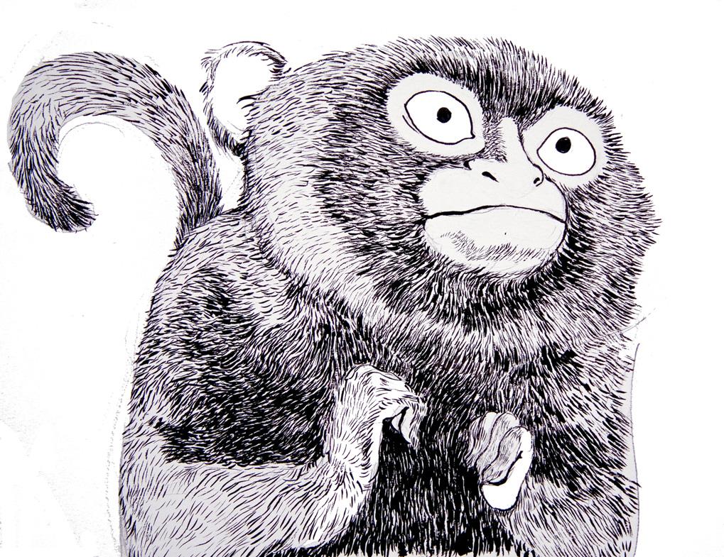 monkey  2 72.jpg
