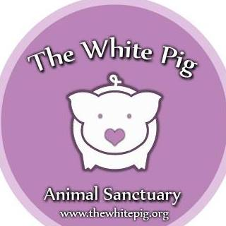 """THE WHITE PIG ANIMAL SANCTUARY  """"Our goal is to provide rescue and safe haven for abused, abandoned, and neglected pigs, as well as reducing the suffering of food animals through vegan education. Advocating a vegan diet is vital because of the enormous impact that it has on animals, the environment, our health, and the world we leave for future generations."""""""