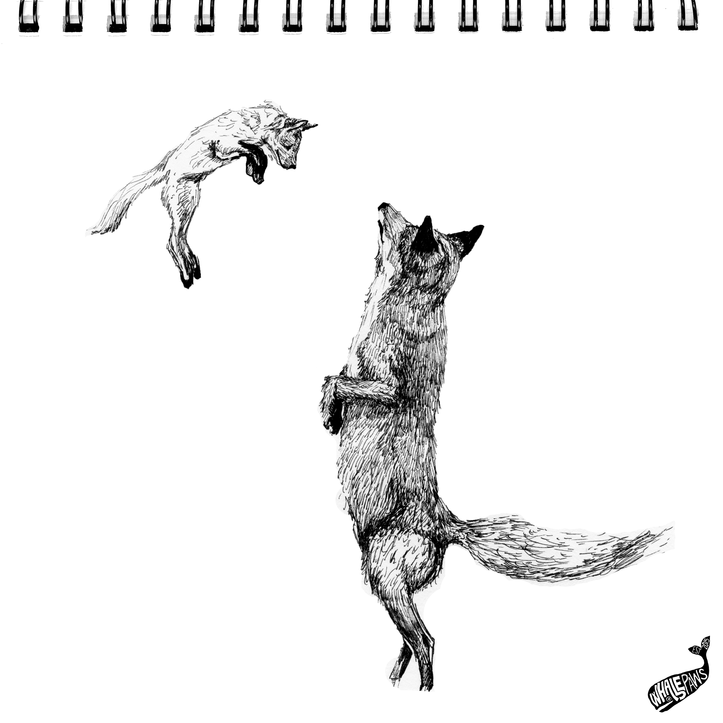 32-FOXES.png