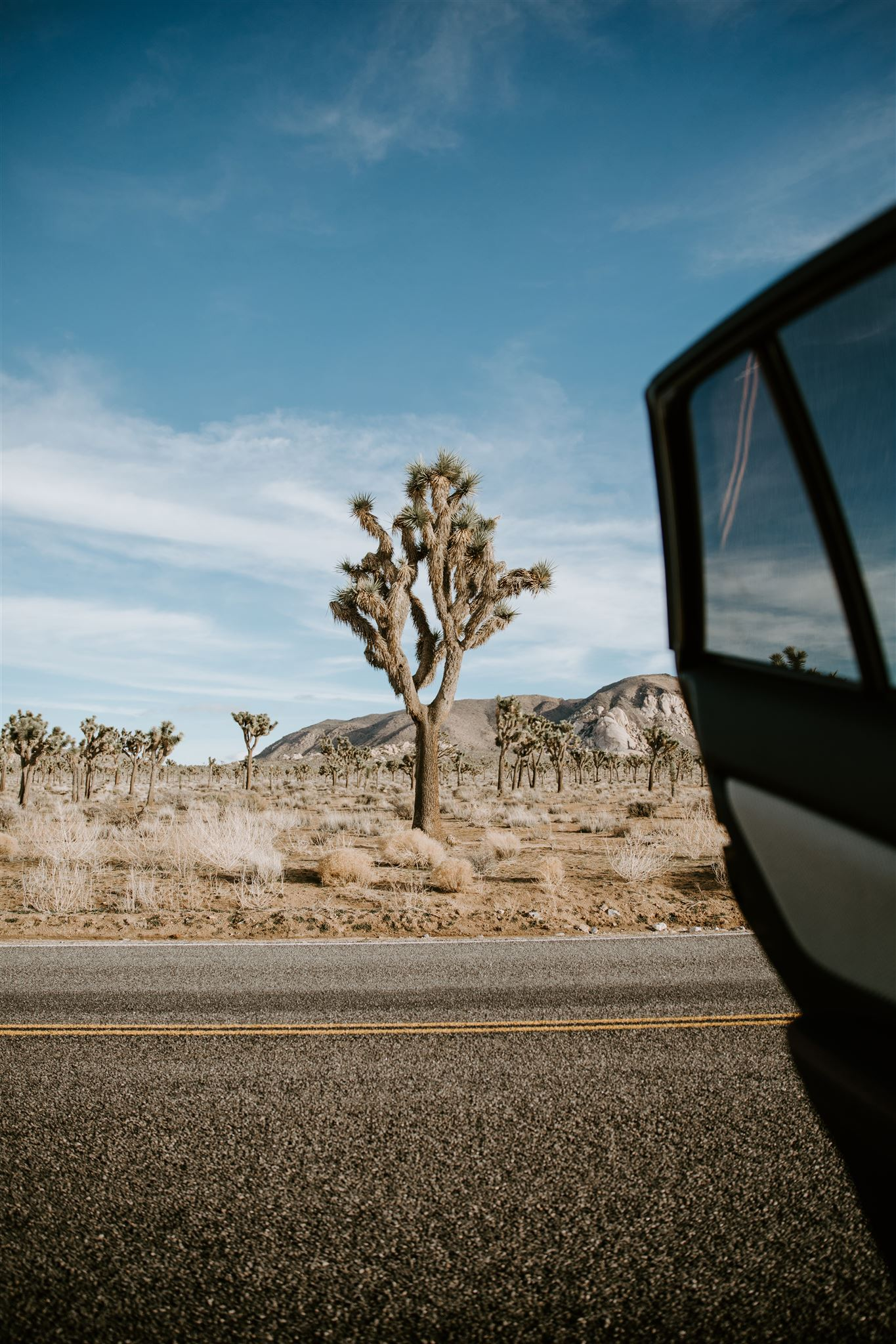 Joshua Tree CA Elopement Wedding  Photographer May Iosotaluno 54.jpg