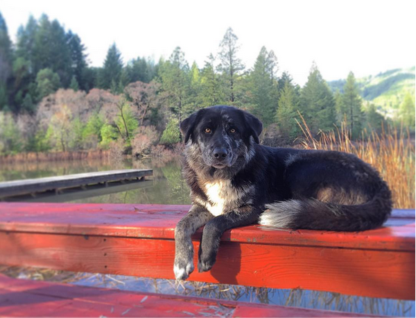 Thanks @dilltron3030 for your lovely picture of Pepper Bear at the  Pond House  . Guests and visitors are encouraged to tag their photos @MendocinoMagic on facebook and instagram!