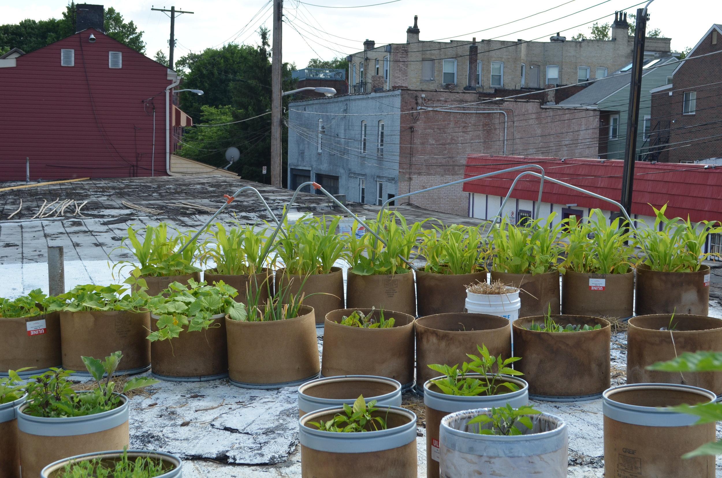 roofplants1.JPG