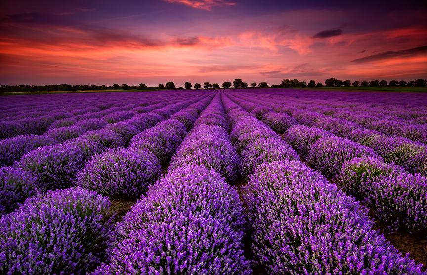 Fragrant Fields