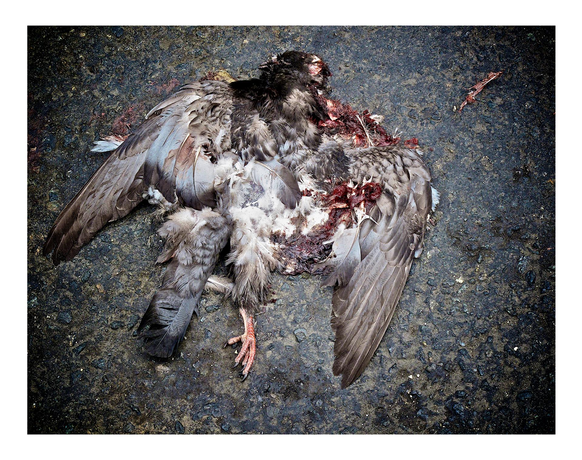 Fallen Angel 01.jpg