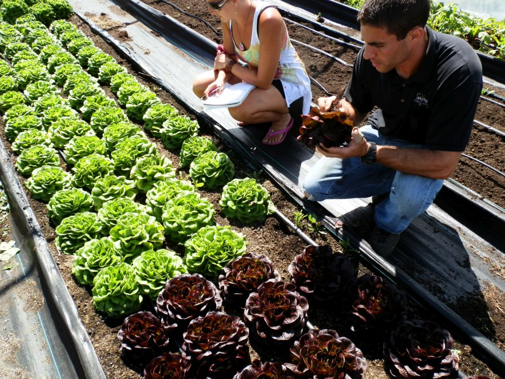 Andy inspecting the  Salanova Lettuce , a recent, and delicious,innovation in salad mix breeding