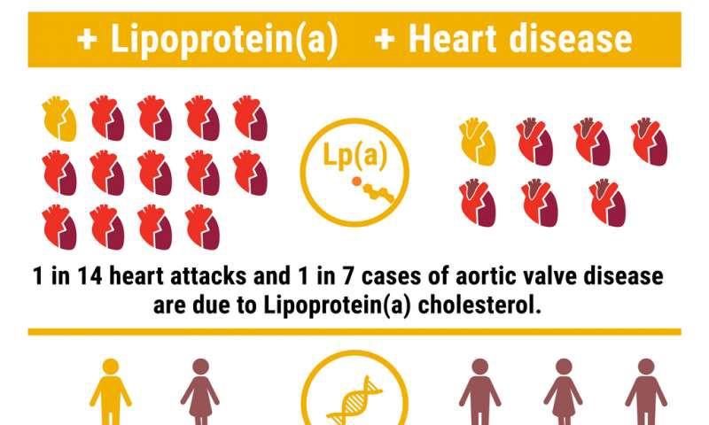 Lipoprotein.jpeg
