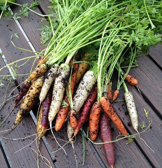 carrot-2876956_960_720.jpg