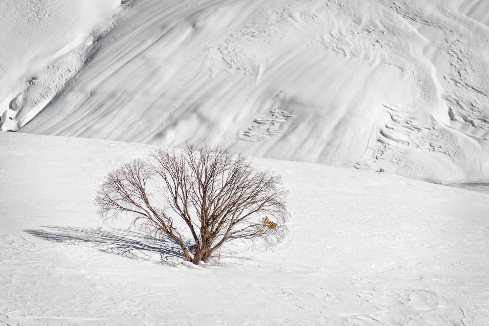 LONE TREE BLUR_MDS3231.jpg