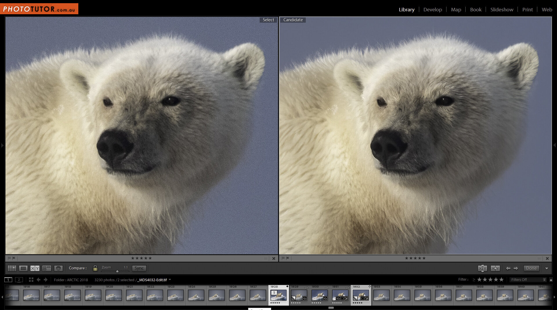 Above: Detail at 100% of an image of a Polar Bear taken with a Tamron 150-600mm zoom lens at 600mm, with ISO set at 250 and f8. At left the RAW file with Lightroom sharpening and minor noise reduction. At right the image with Topaz Denoise AI applied. The Topaz version has removed the luminance noise from the sky (the image was taken through light mist) and brought out the very fine details of the fur and around the eyes.