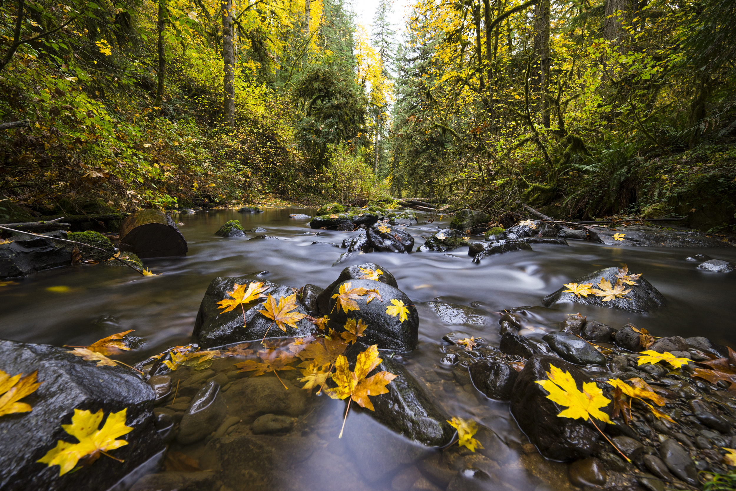 McDowell Creek, Oregon
